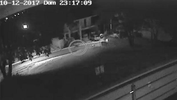 Onça é gravada em condomínio fechado de Goiânia; assista ao vídeo