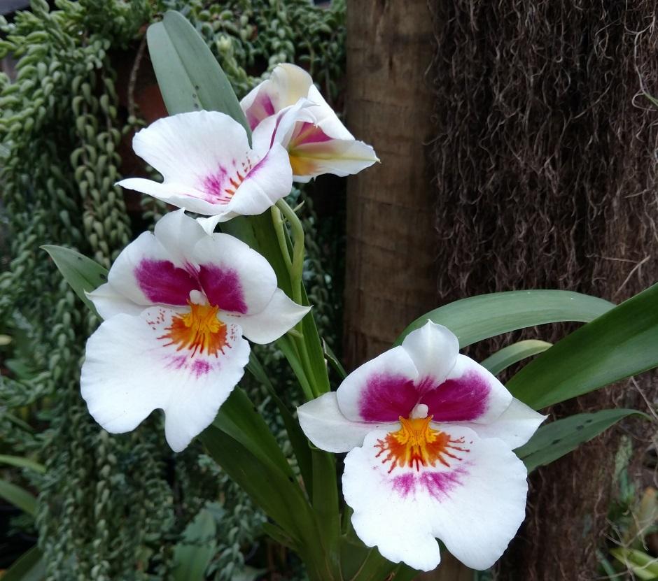 Shopping Estação Goiânia recebe Exposição de Orquídeas