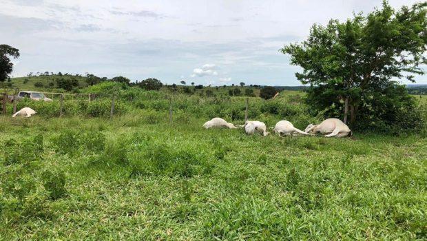 Raio cai em fazenda e mata cinco bois em Aloândia
