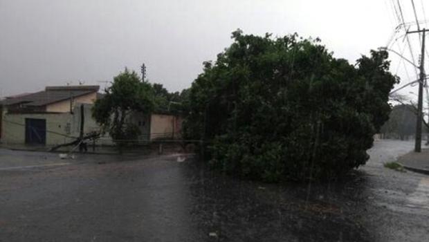 Comurg retira árvores caídas durante as chuvas de ontem em Goiânia