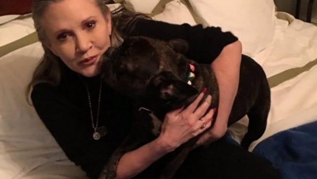 Cachorro de Carrie Fisher assiste a 'Star Wars' e reconhece a dona