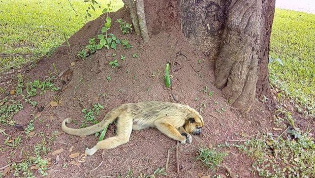 Macaco morto é encontrado próximo a condomínio de Goiânia
