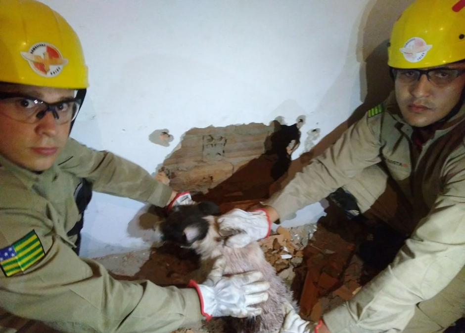 Bombeiros resgatam cachorro que ficou preso entre duas paredes, em Catalão