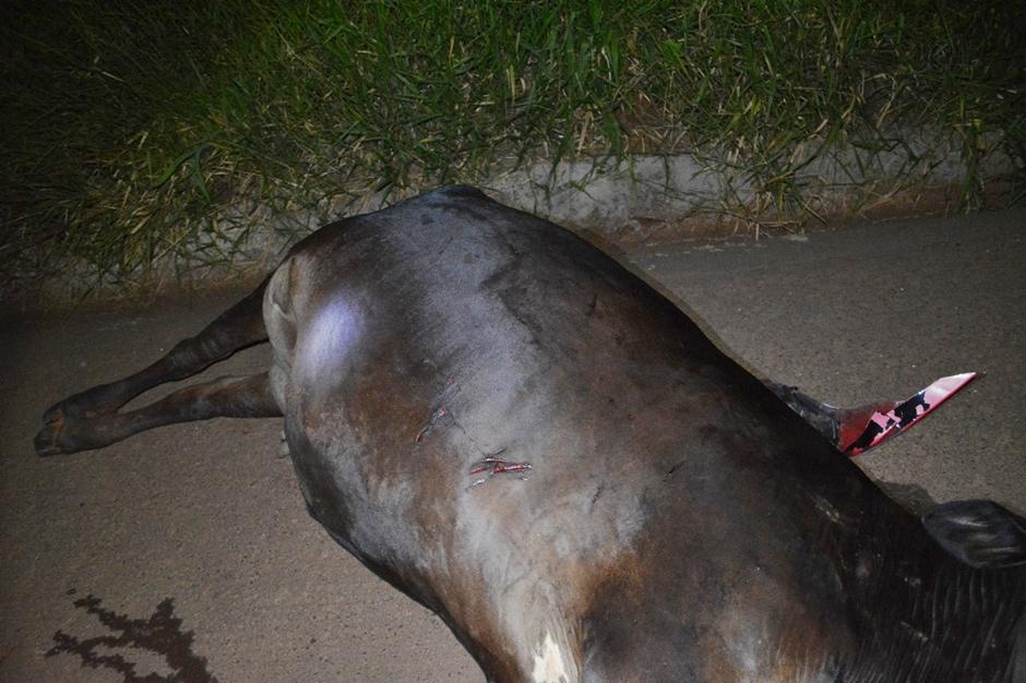 Homem morre após atropelar uma vaca na BR-364, em Jataí
