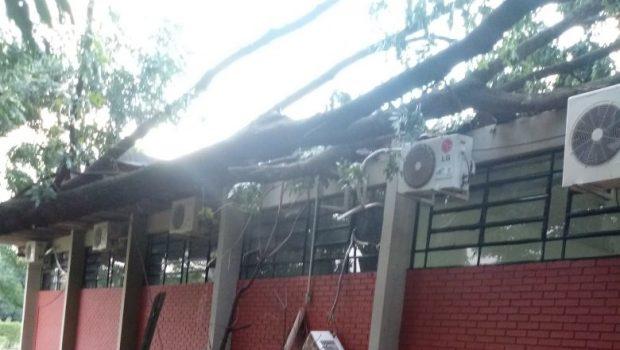 Temporal arranca telhas e derruba árvores no Detran, em Goiânia