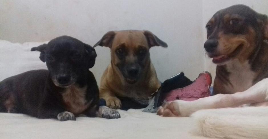 Cachorros resgatados em Trindade estão em abrigo e precisam de doações
