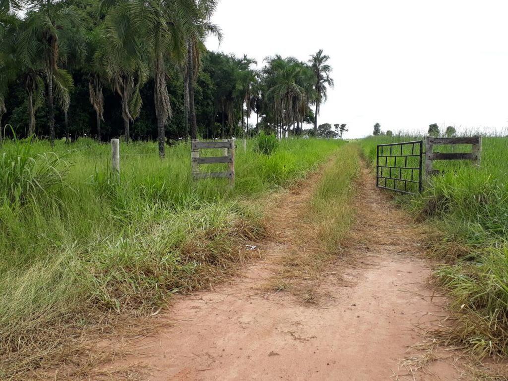 Fazenda tem 25 cabeças de gado furtadas em Itapirapuã (GO)