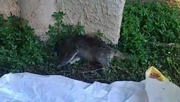 Macaco é encontrado morto em Novo Gama