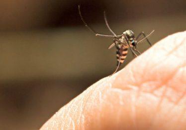 Cidade de SP registra duas mortes por reação à vacina da febre amarela
