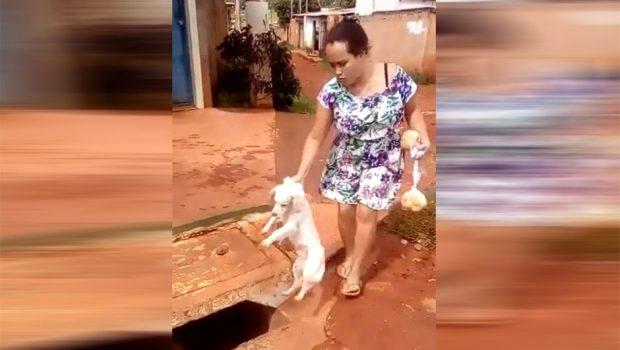 Mulher joga cachorro em bueiro e causa revolta em moradores de Novo Gama (GO)