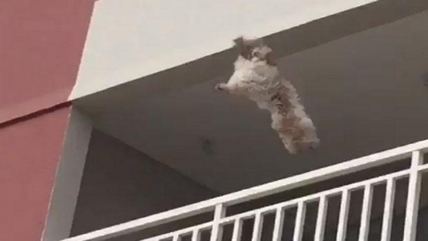Cadela desesperada com fogos de artifício pula do 3º andar e é salva por moradores, em Goiânia; assista ao vídeo