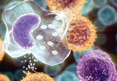 Cientistas dos EUA avançam no uso células-tronco para doenças incuráveis