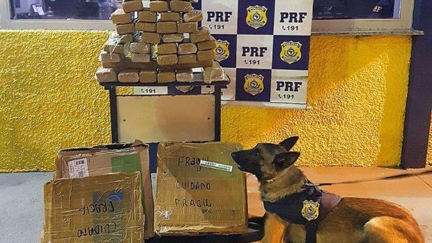 Mulher é presa com 41 tabletes de maconha na BR-153 em Uruaçu