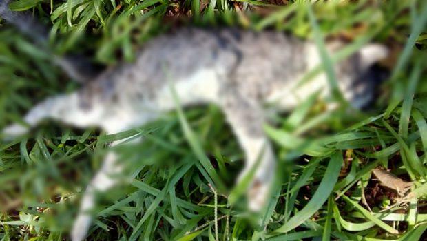 Dois gatos mortos com sinais de maus-tratos são encontrados no Jardim Santo Antônio, em Goiânia