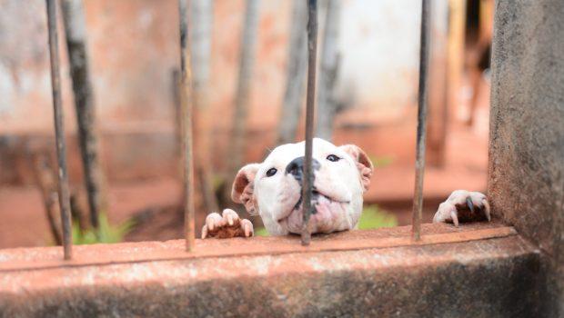 Grupo denuncia sacrifício de animais no Centro de Zoonoses, em Goiânia