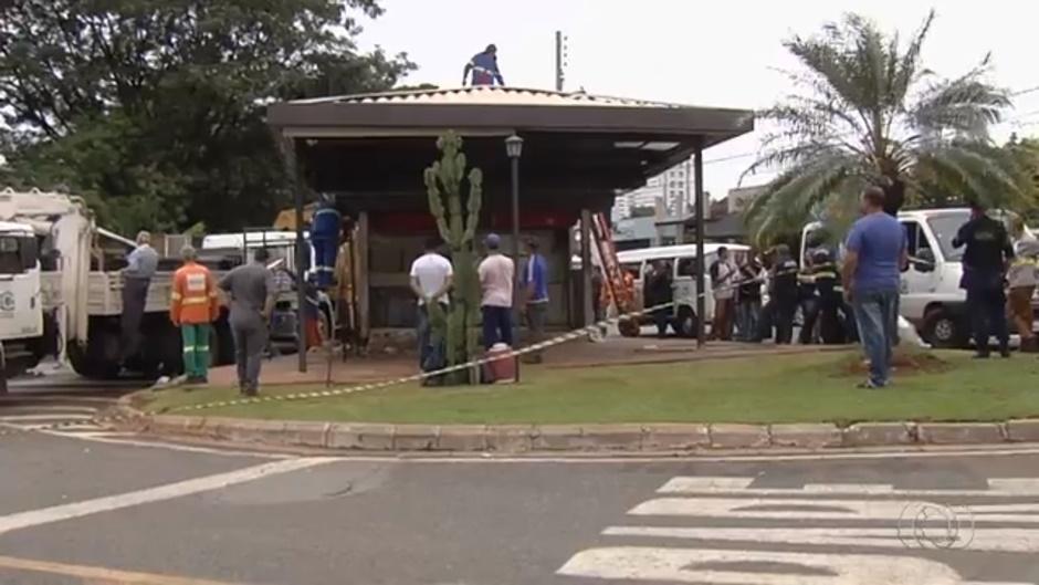 Prefeitura suspende remoção dos pit dogs irregulares em Goiânia