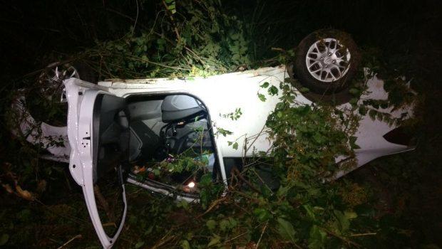 Tamanduá na pista causa acidente com família na BR-050, em Catalão