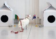 Gato morador de museu vira o vidente oficial da Copa do Mundo