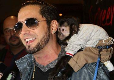 Organização critica Latino pela morte de macaco e afirma que animal era status