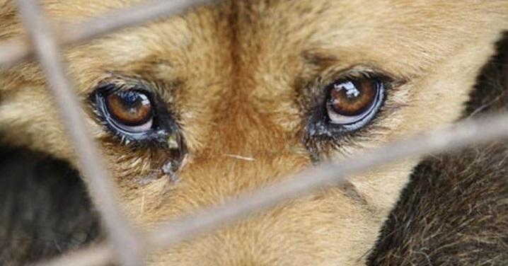 Em 2017, Tribunal de Justiça registra apenas dois processos por maus-tratos a animais em Goiás