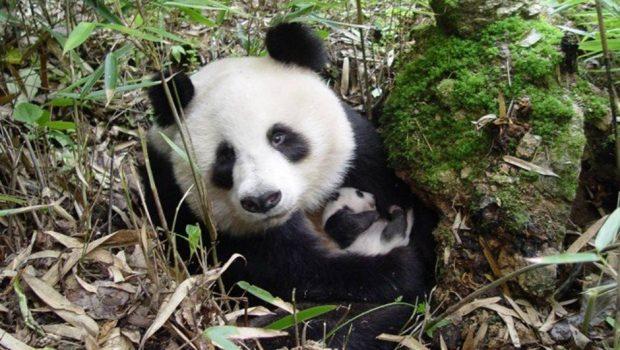 Extinção pode atingir 50% das espécies de áreas críticas do planeta