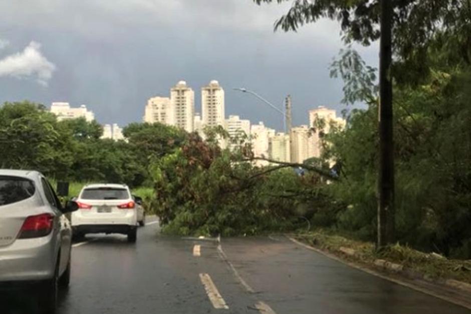 Com o forte temporal, 43 árvores caíram em Goiânia