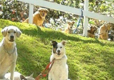 Homem é obrigado pela Justiça a pagar pensão para animais de estimação