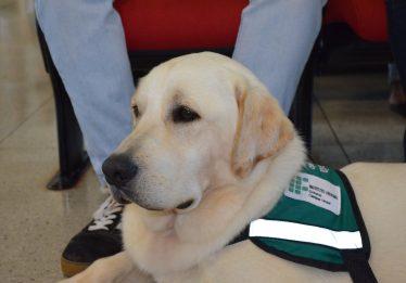 Centro de treinamento de cães-guia de Urutaí é um dos primeiros do Brasil