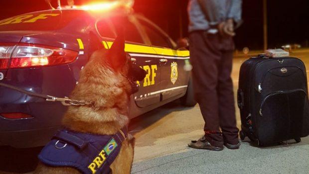 Cão farejador detecta maconha com passageiro de ônibus na BR-060, em Recanto das Emas (DF)