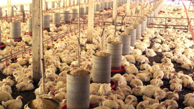 Com ração em granjas e soja indo para porto, setor agrícola inicia retomada