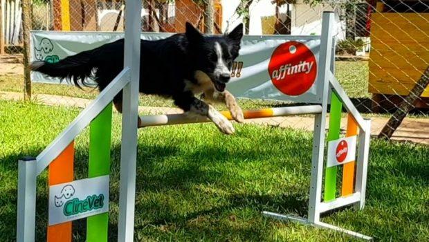 Evento esportivo para cães acontece neste final de semana, em Goiânia