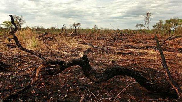 Desmatamento no Cerrado recua, mas em 7 anos é 60% maior que perda da Amazônia