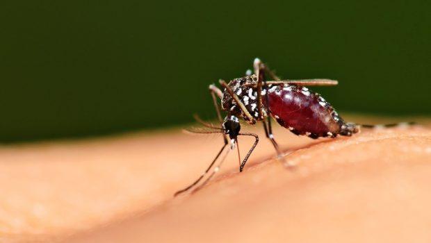 OMS declara Paraguai país livre da malária