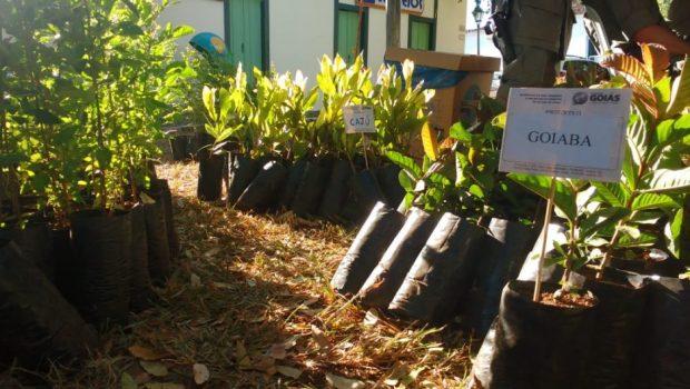 Mudas de árvores são doadas durante o 20º FICA