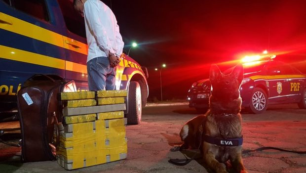 Passageiro de ônibus sai de Goiânia com 28 quilos de maconha e é preso em Planaltina