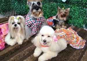 Quadrilha de cães agitam pet place neste sábado em Goiânia