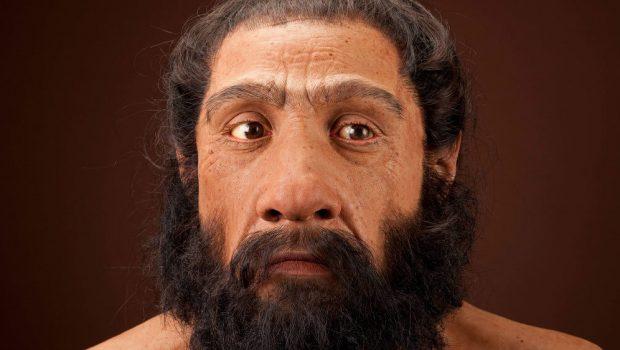 Cientistas estão tentando criar pequenos cérebros de Neanderthal