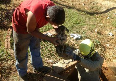 Bombeiros retiram filhote de cão de dentro de tubulação pluvial, em Ipameri