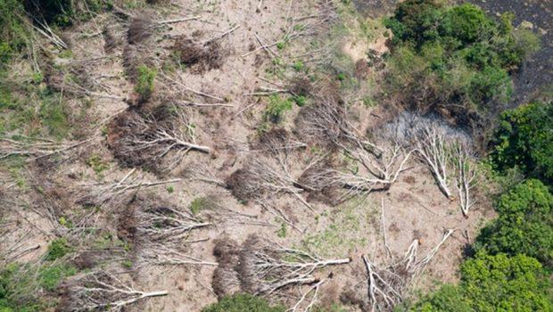 Retrocesso ambiental no Brasil pode custar R$ 20 trilhões para resto do mundo, diz estudo