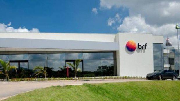 Possível fechamento de abatedouros de frangos da BRF em Goiás preocupa produtores dos animais