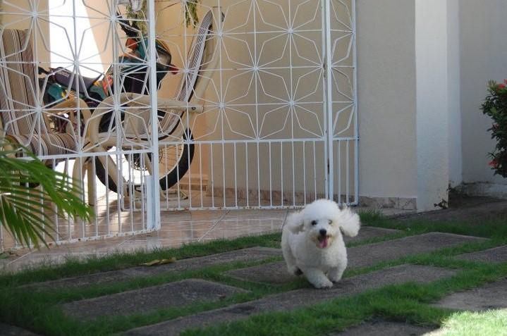 Em caso de divórcio, juiz de Itajá concede guarda de cachorro à mulher