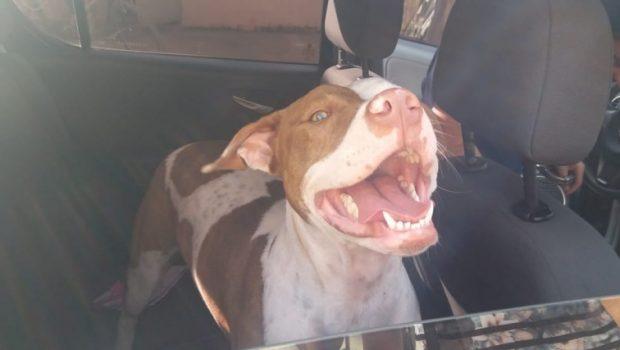 """Casal é investigado por furto de cachorra e posterior cobrança de """"resgate"""""""