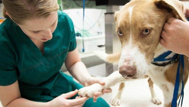 Projeto de Lei aumenta para até R$ 200 mil multa de maus-tratos a animais