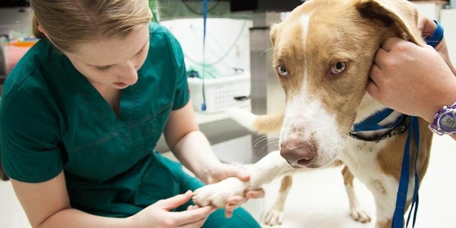 Projeto de Lei que cria hospital público veterinário em Goiânia é aprovado