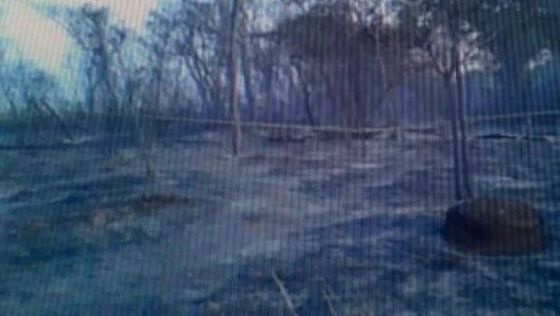 Funcionários de usina são encontrados carbonizados em canavial de Itaberaí