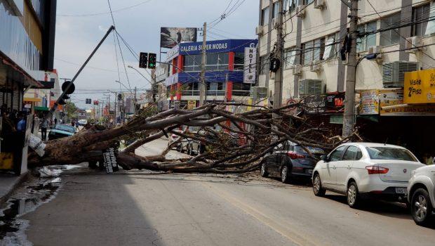 Árvore cai, atinge veículo e provoca interdição da Avenida Contorno, em Goiânia
