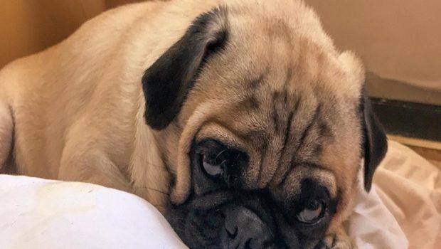 Imagens flagram cachorro sendo roubado no Setor Bela Vista, em Goiânia