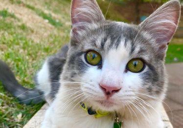 Gato atingido por tiro de chumbinho passa por cirurgia, em Goiânia