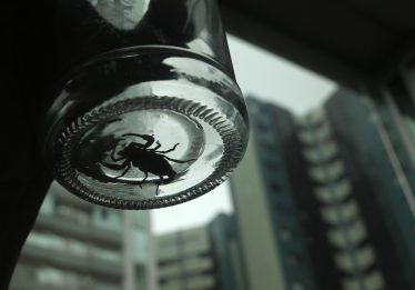 Moradores do Criméia Oeste reclamam de aparições de escorpiões em residências