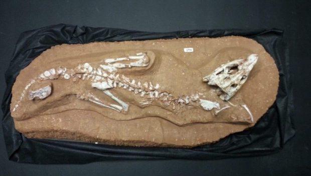 Minas Gerais descobre 'novo' crocodilo de 80 milhões de anos